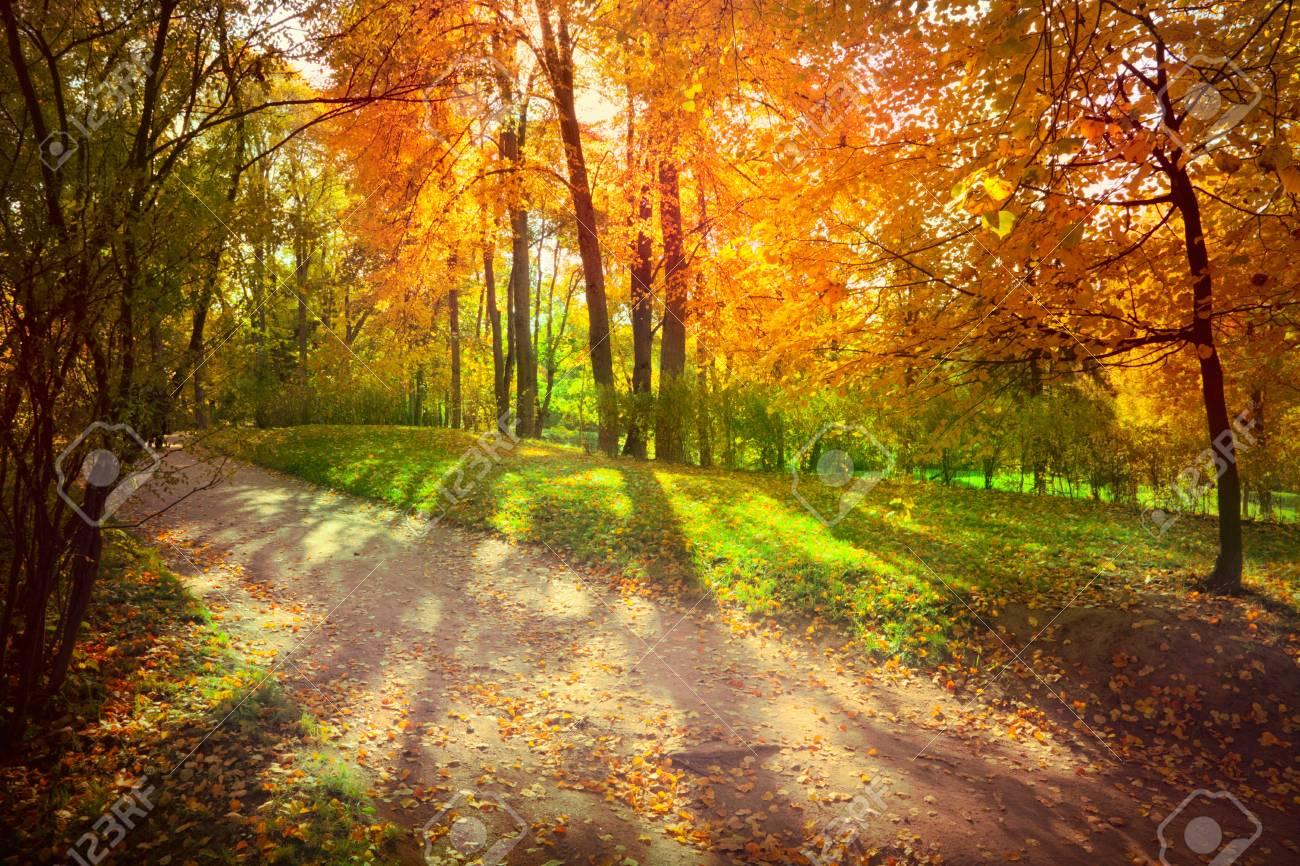Autumn landscape - 32455967
