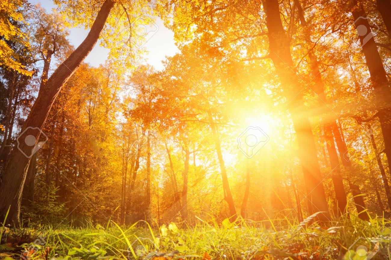 Autumn landscape - 32508571