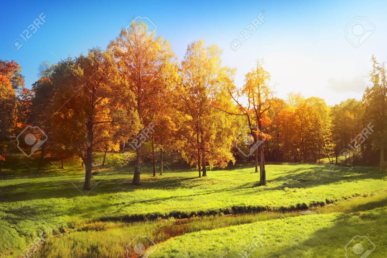 Autumn landscape - 32577823