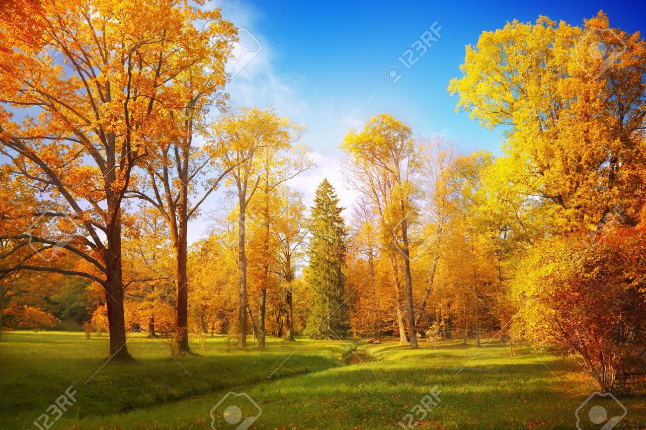 Autumn landscape - 35671553