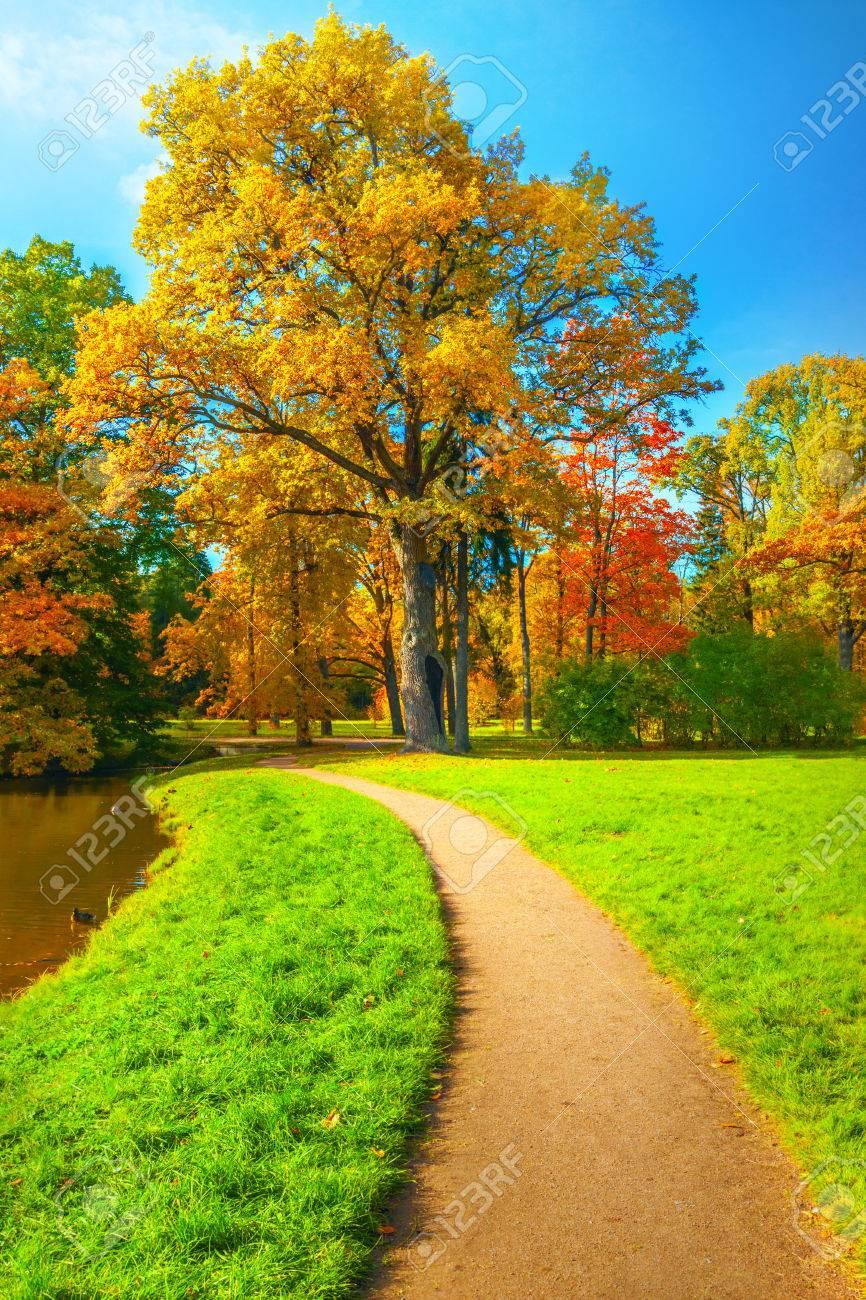 Autumn landscape - 44657407