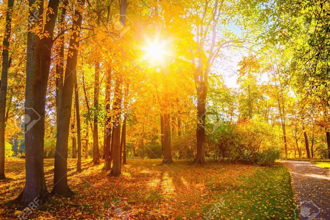 Autumn landscape - 46425130