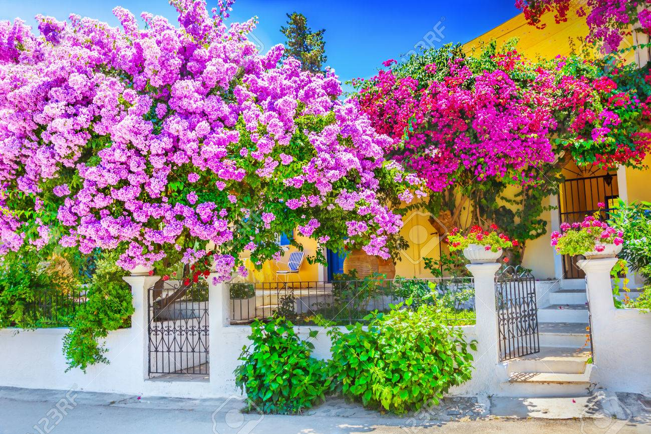 House with bougainvillea - 48449598