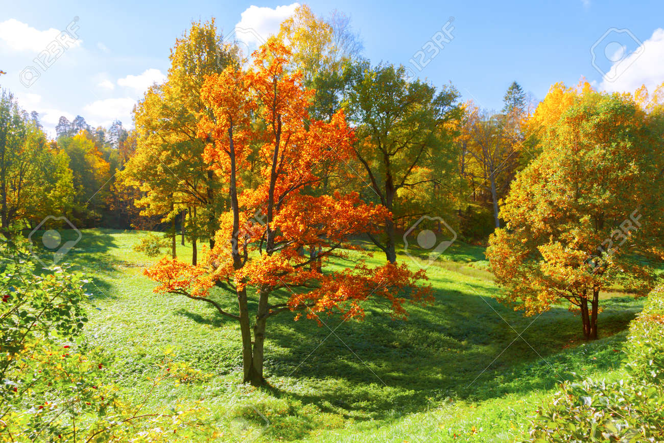 Autumn landscape with yellow trees - 154813769