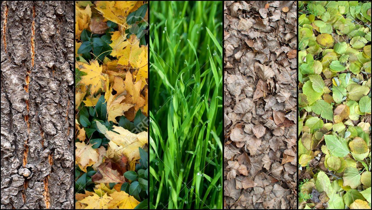 Collage of a five autumn backgrounds. Wood, grass, leaves. Stock Photo - 5846171