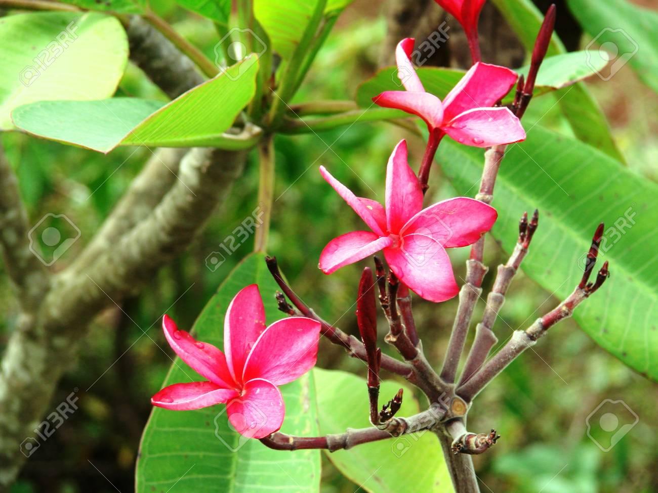 Un Jardin Dans Le Village De L\'Etat De Maharashtra, Inde Contient ...