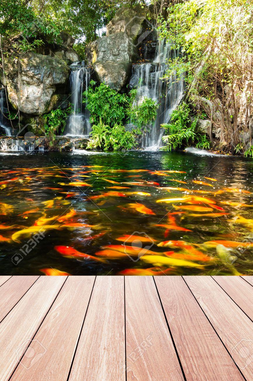 Poissons Koi dans un étang dans le jardin avec une cascade et une  passerelle de bois de premier plan