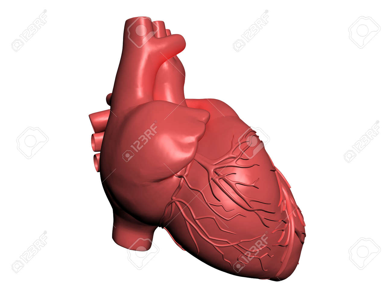 Model of human heart Stock Photo - 10308897