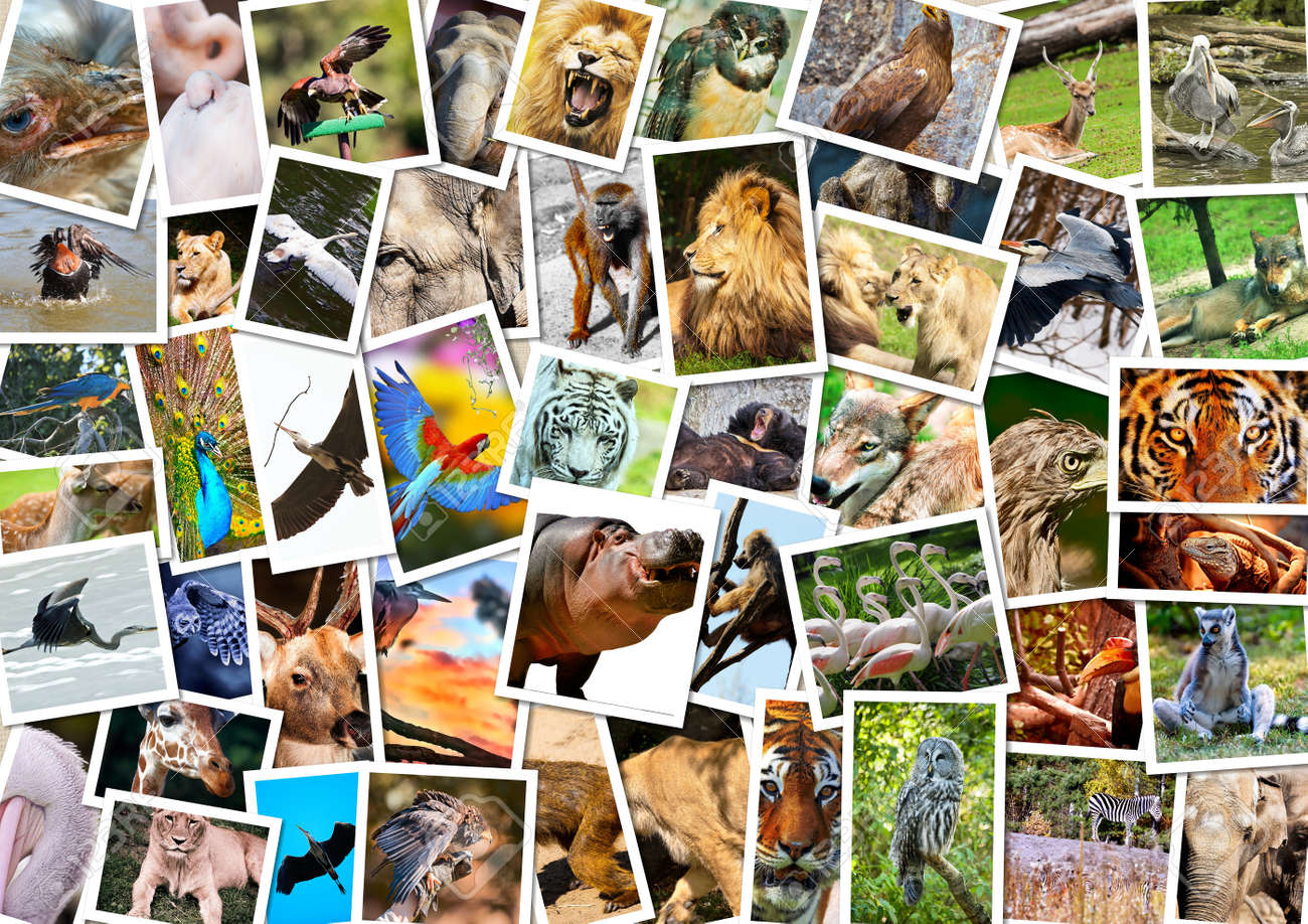 Different Animals Collage Stock Photo