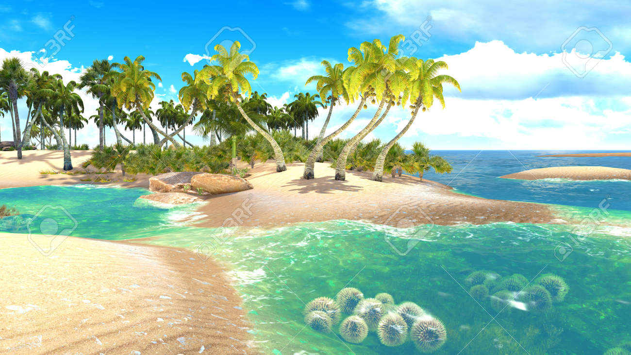 Tropical Paridice Images - Reverse Search