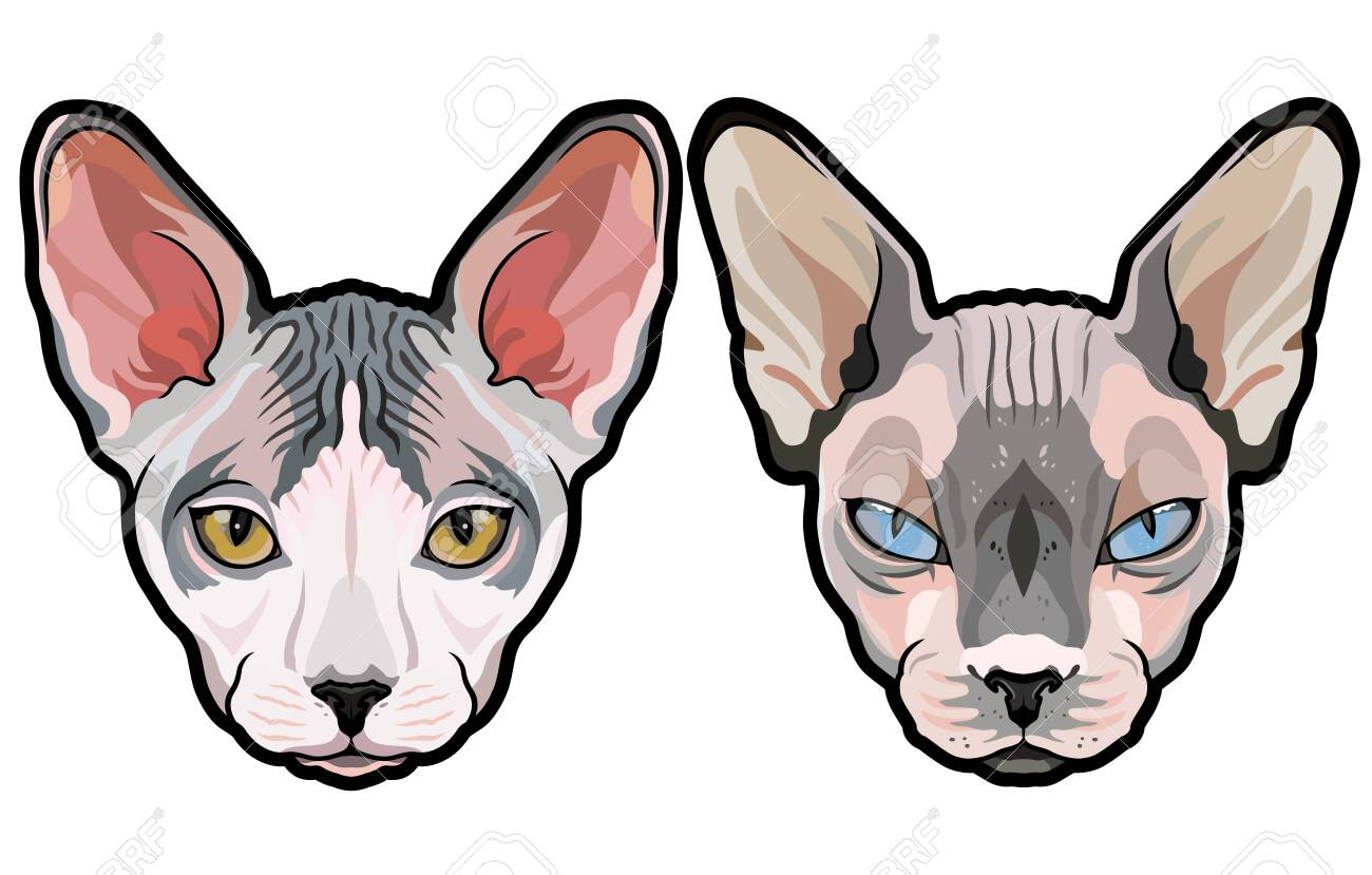 Fashion Vector Portraits Of Elegant Sphynx Cat Heads Isolated Royalty Free Cliparts Vectors And Stock Illustration Image 144897007