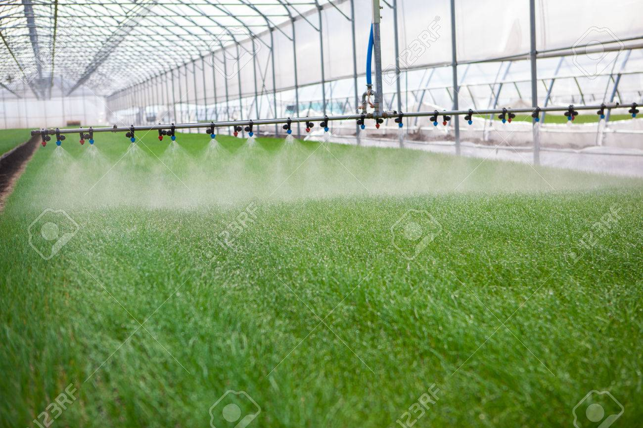 Greenhouse watering system in action - 39481980