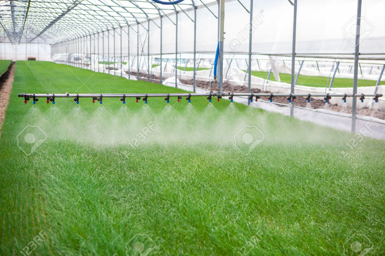 Greenhouse watering system in action - 39481987