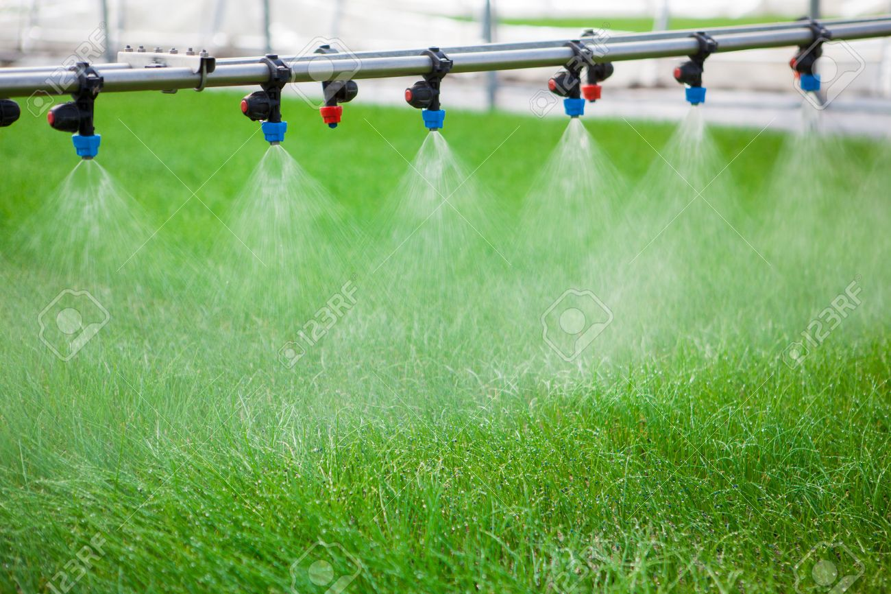 Greenhouse watering system in action - 39481998