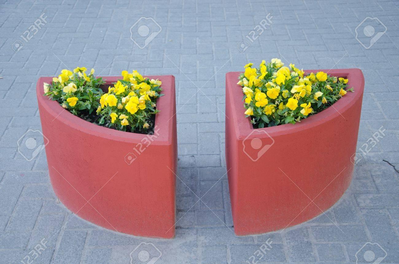 Due vasi di cemento fiore rosso su piastrelle pavimento urbano