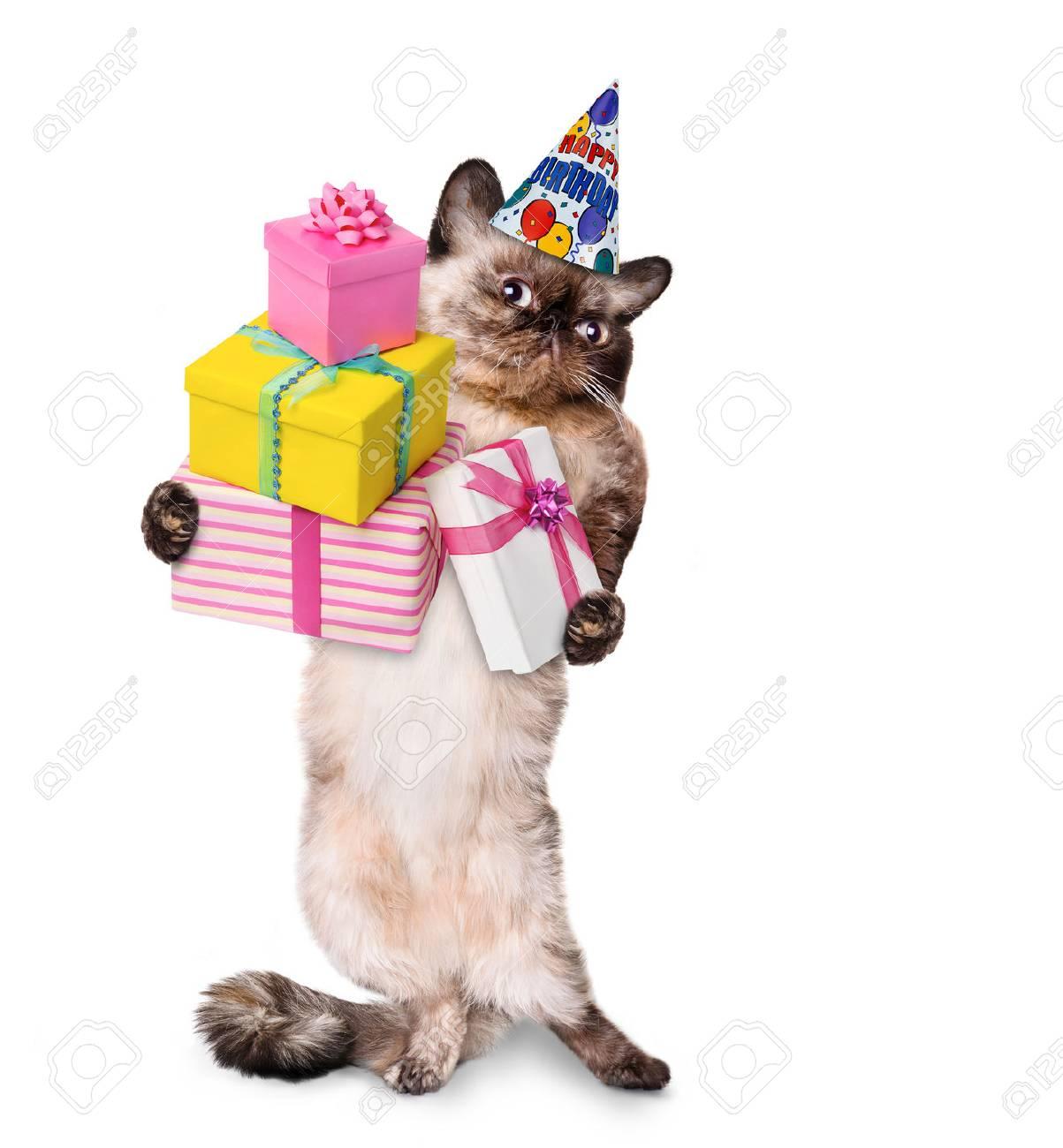 Geburtstags Katze Geburtstagskarten Spruche Echte
