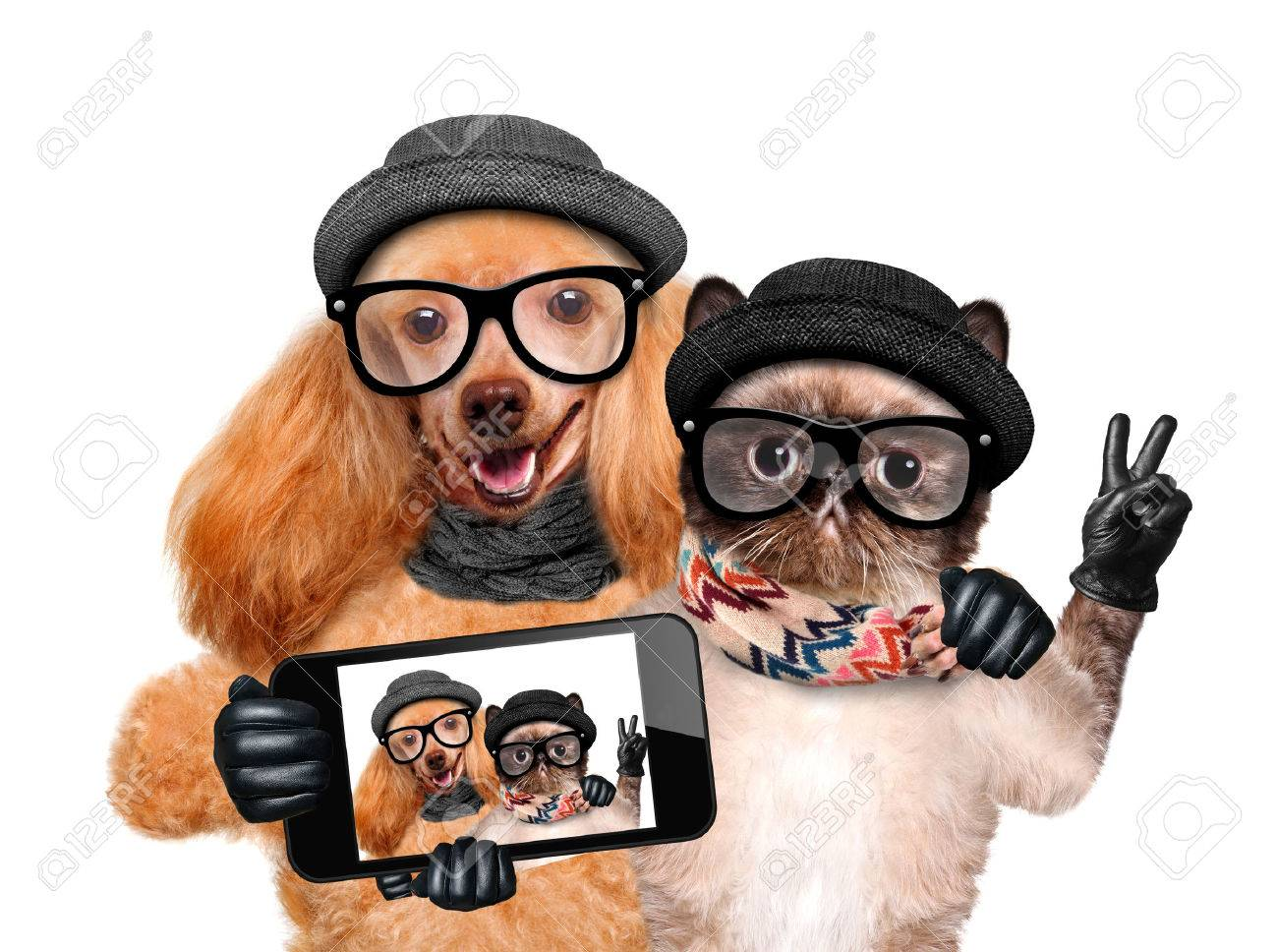 71562fe7 Dog with cat taking a selfie together with a smartphone. Stock Photo -  40636677