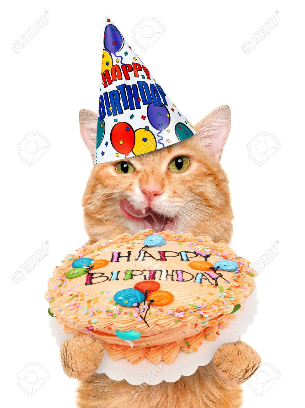 birthday cat stock photo picture and royalty free image image