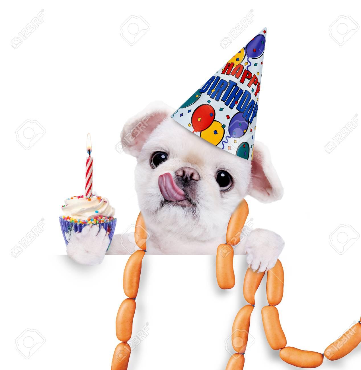Geburtstag Hund Mit Wurstchen Uber Weissen Fahne Lizenzfreie