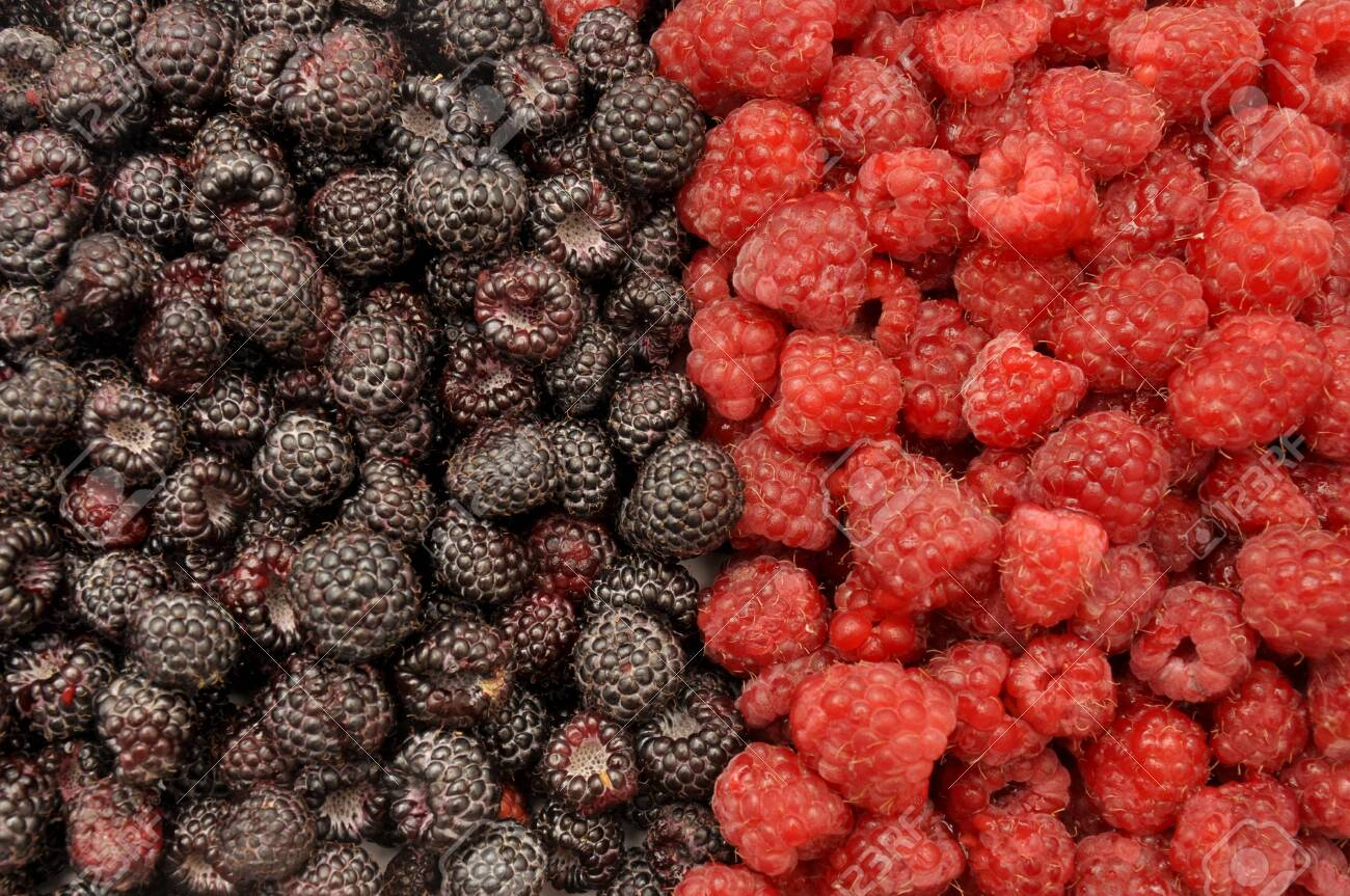 Blackberry and raspberry. Berries black and red background - 150233100