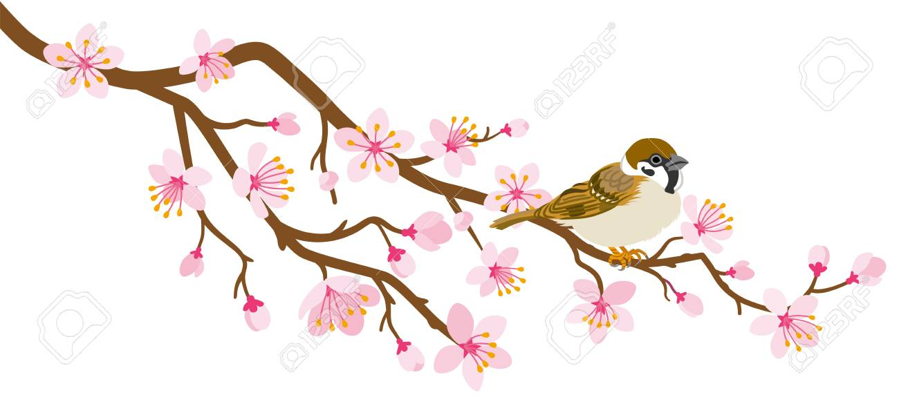 Small Bird Perch On Cherry Blossom Branch House Sparrow Royalty Free Cliparts Vectors And Stock Illustration Image 124750781