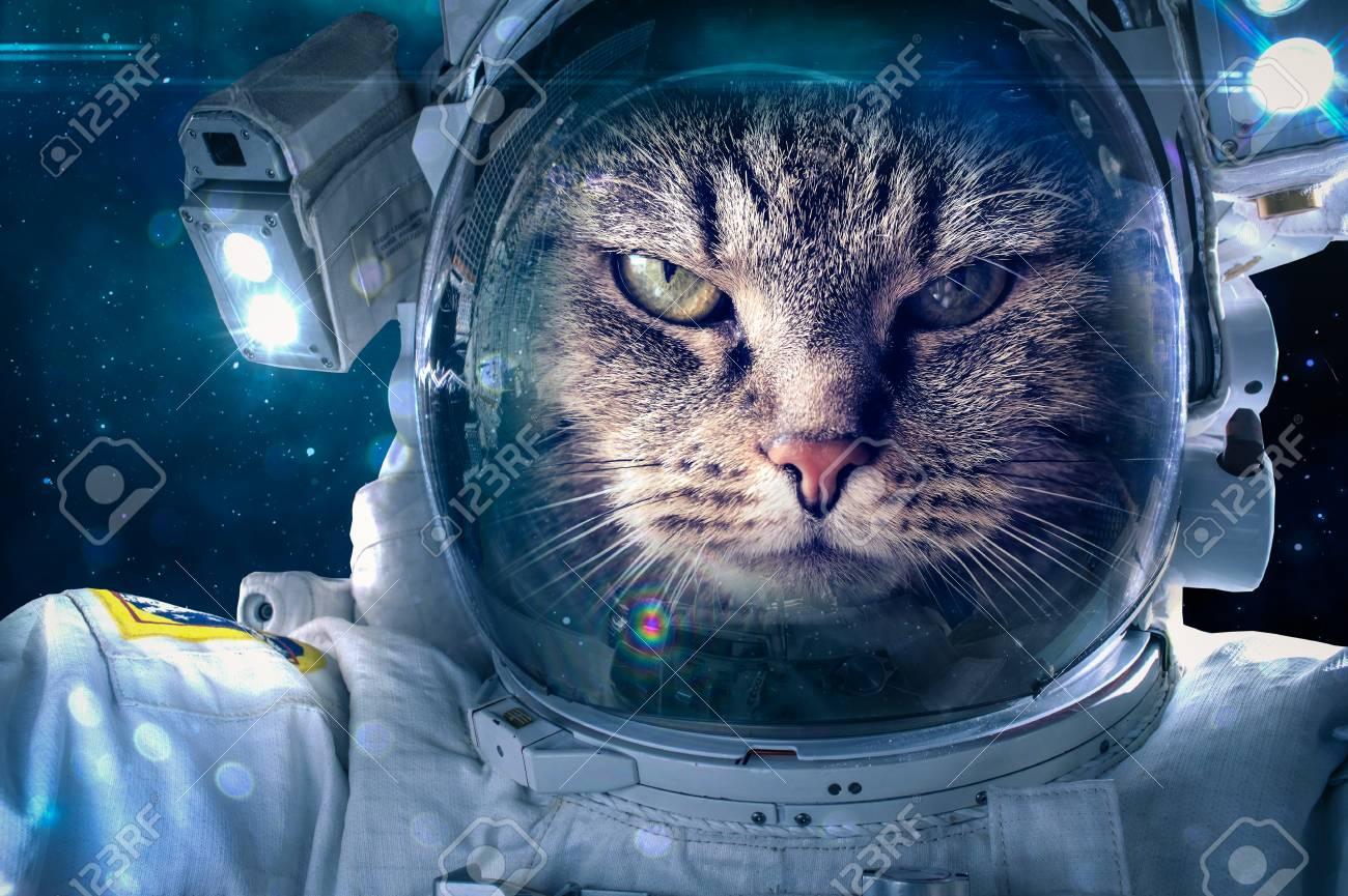 宇宙猫 画像