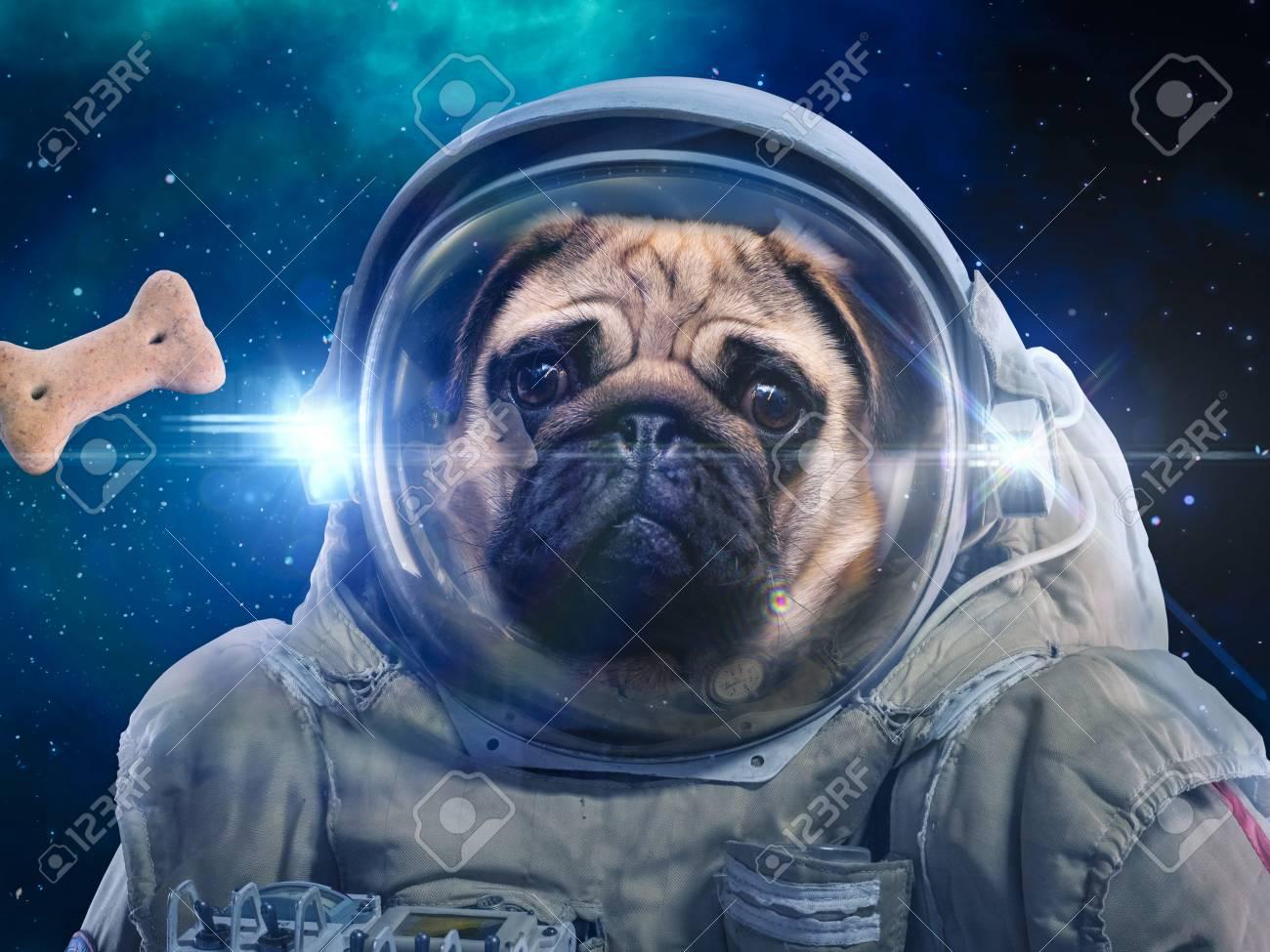 Space dog Stock Photo - 97027270