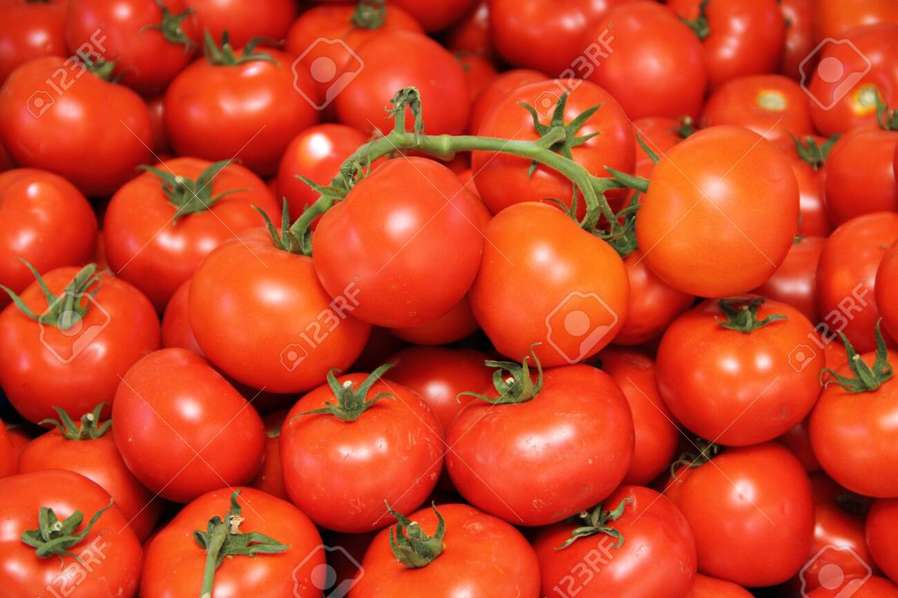 Red tomatoes in the market - 142072759