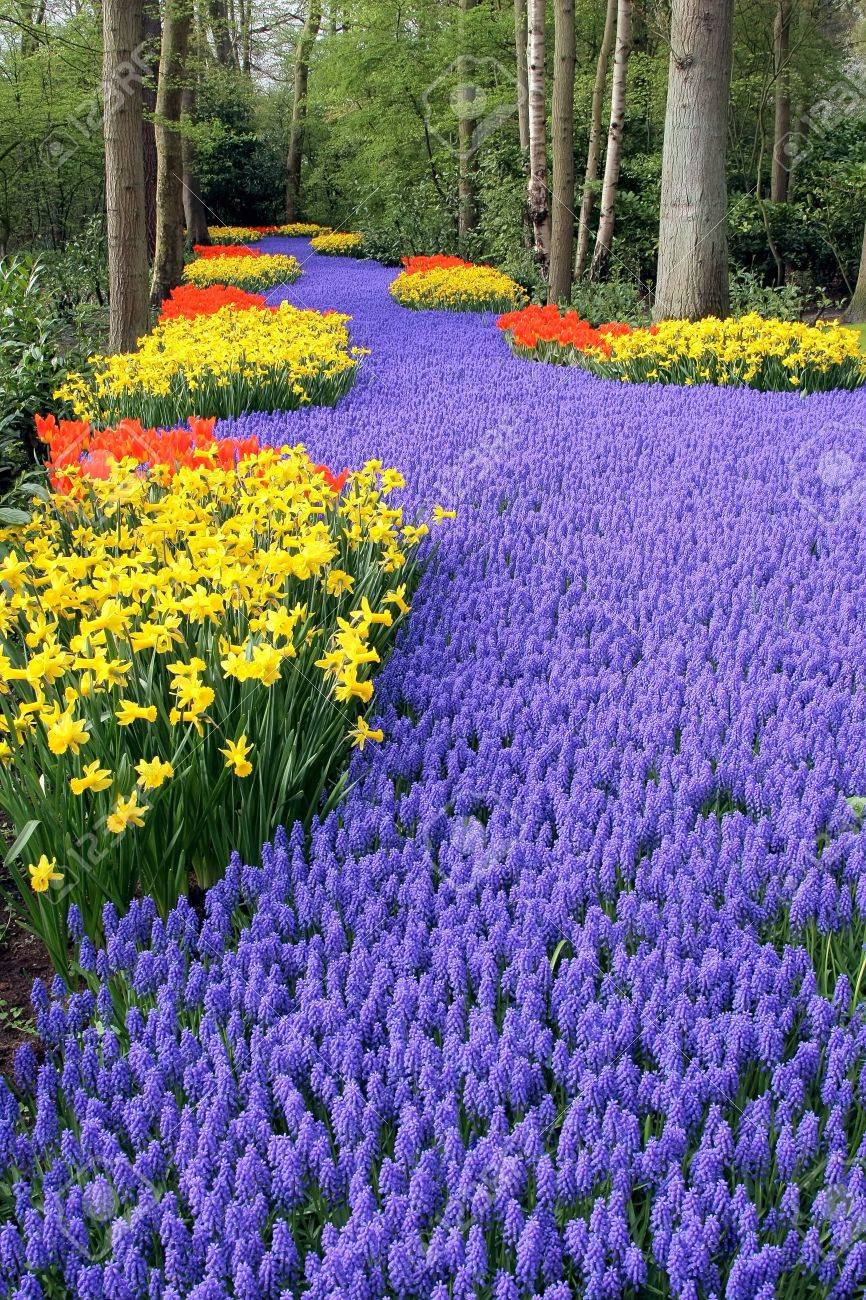 Fower bed, Keukenhof, the Netherlands Stock Photo - 4370857