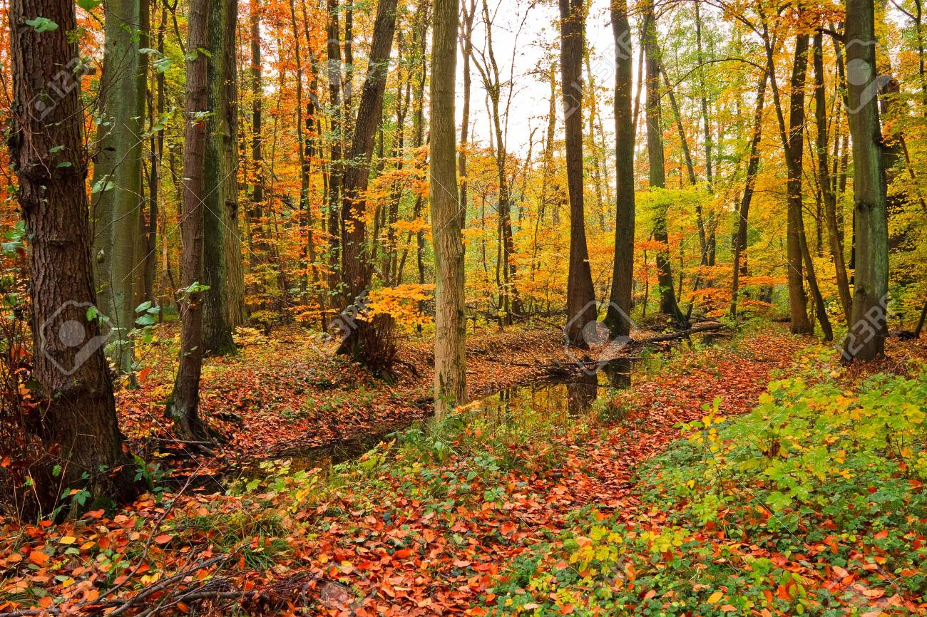Wooden river in autumn forest Stock Photo - 5615088