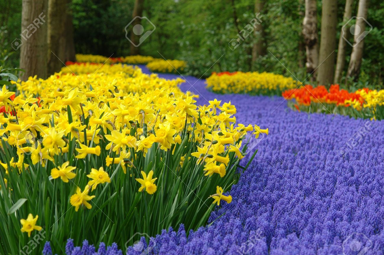 Spring flower bed Stock Photo - 6565167