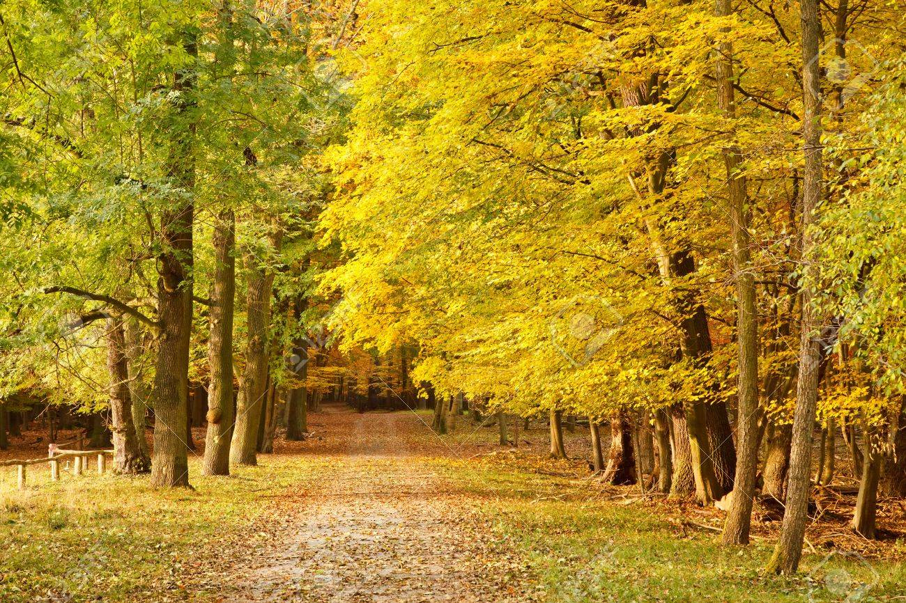 Pathway in the autumn forest Stock Photo - 7370514