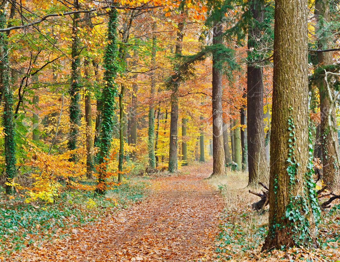 Pathway in the autumn forest Stock Photo - 7554104