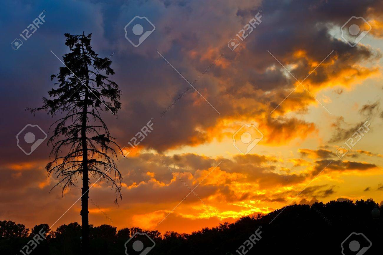 Pine tree and colorful sky Stock Photo - 9791368