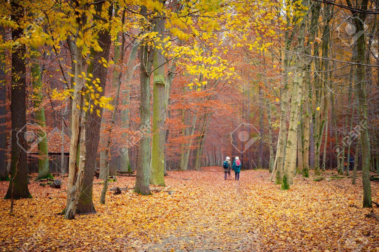 Pathway in the autumn forest Stock Photo - 10312479
