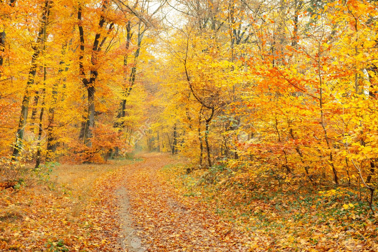 Autumn in the forest Stock Photo - 10793552