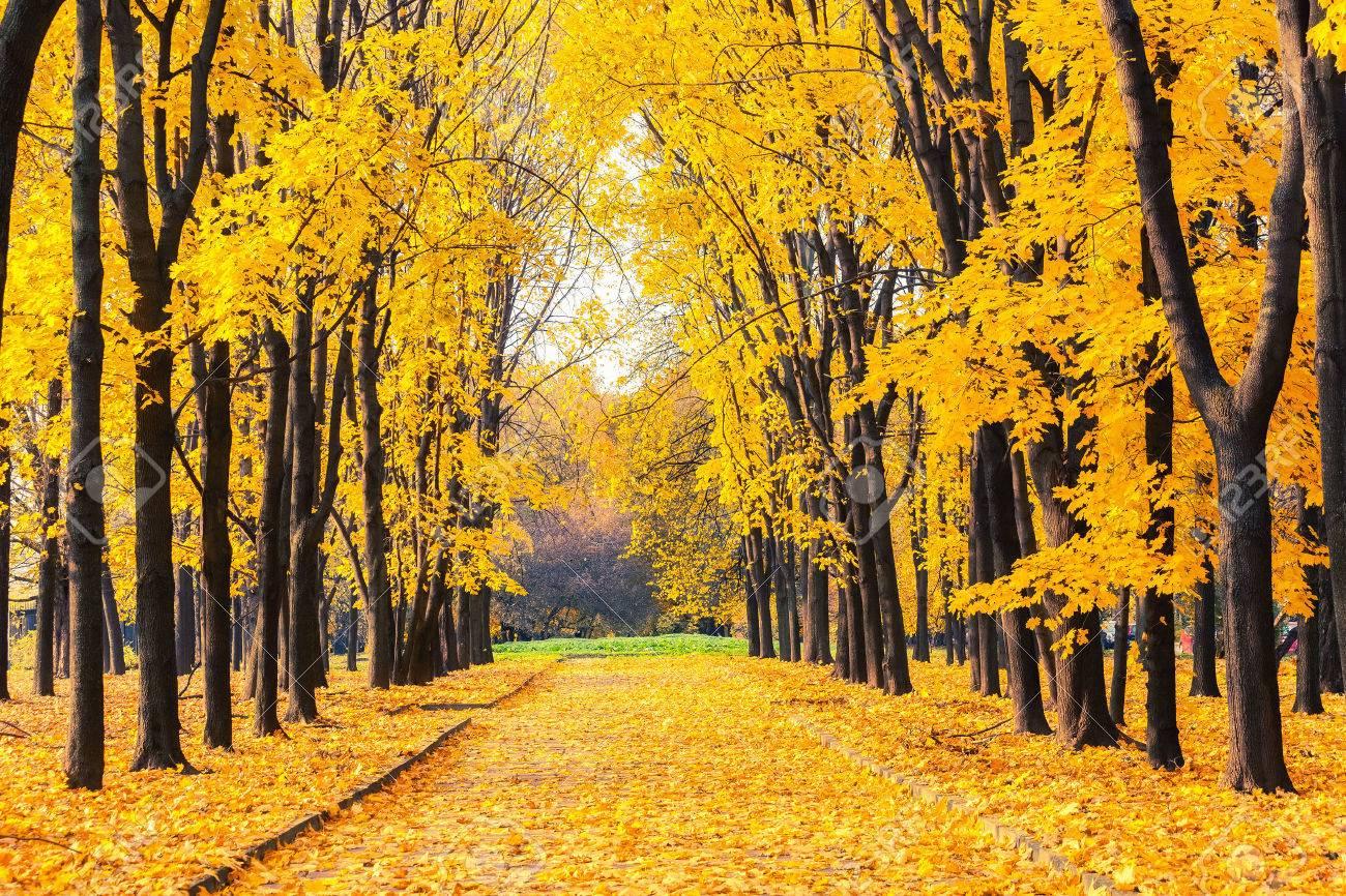 Alley dans le parc de l'automne lumineux Banque d'images - 46044239