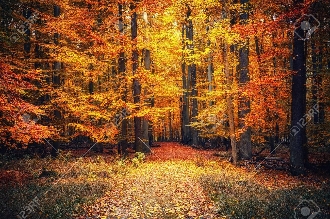 Voie dans le parc automne Banque d'images - 46755932