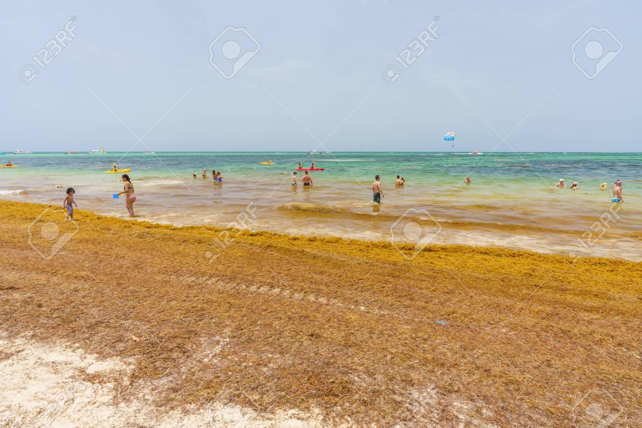 Punta Cana, Dominican Republic - June 24, 2018: : sargassum seaweeds