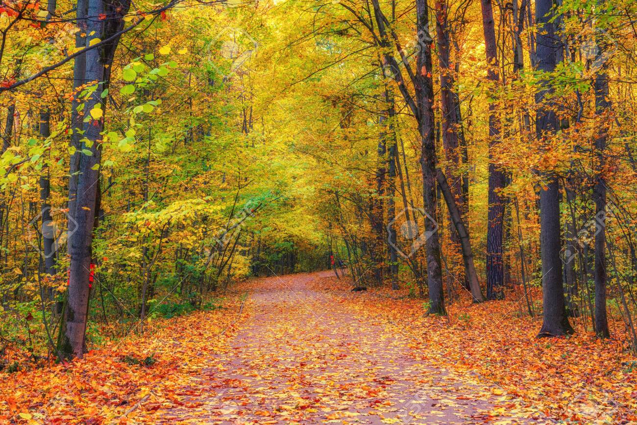 Pathway in the bright autumn forest - 131087584