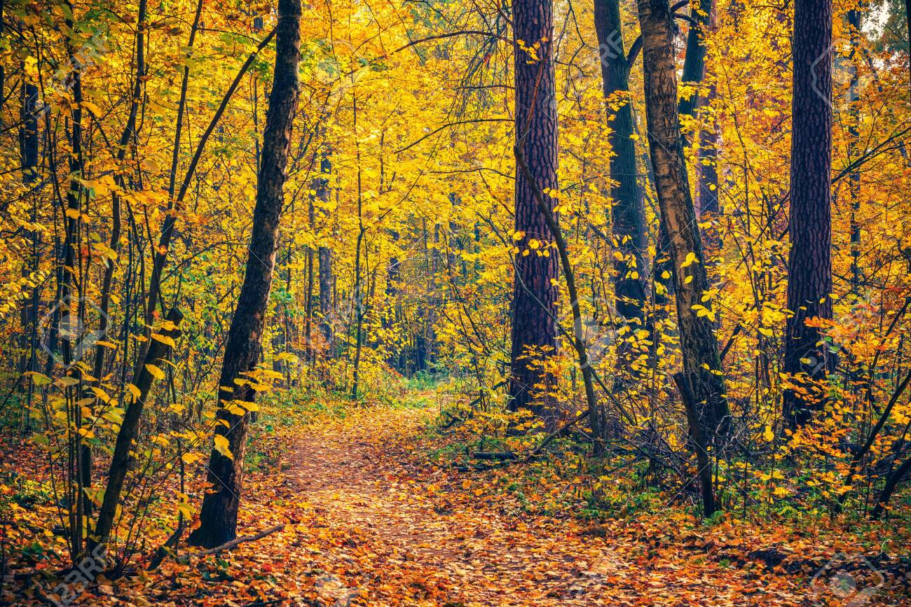 Pathway in the bright autumn forest - 131087587