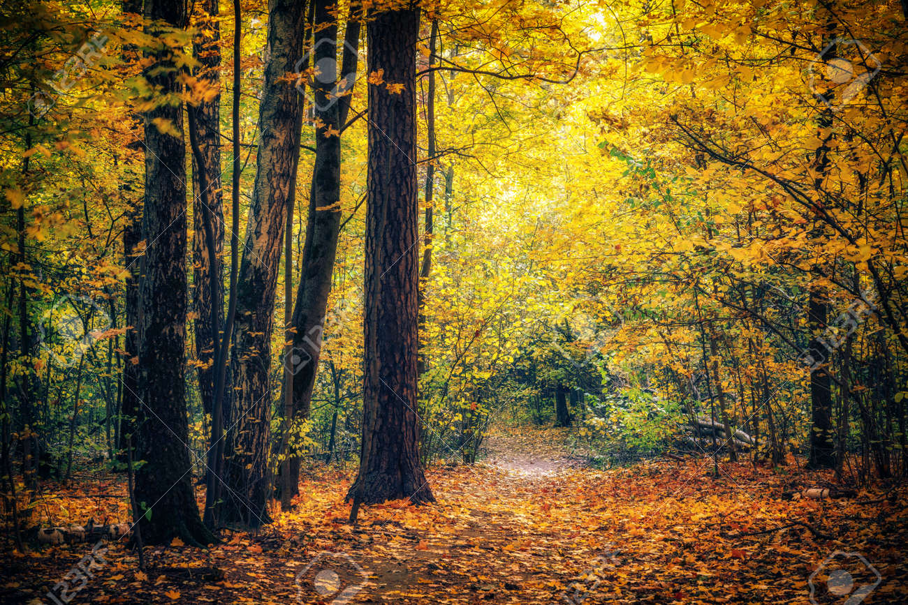 Pathway in the bright autumn park - 156074984