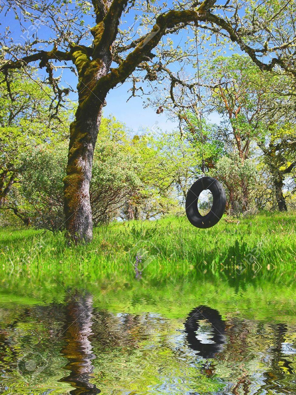 Old Tire Swing in an Oak Tree