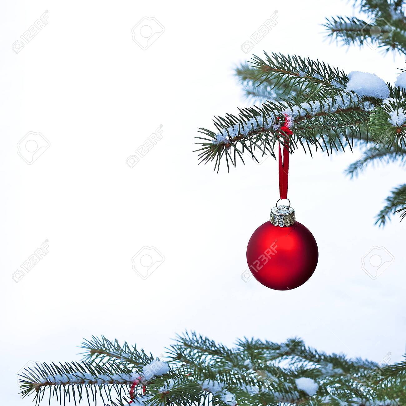 Close-up of red Christmas Bauble Ball hanging on snow covered pine tree branches outside. - 142320224
