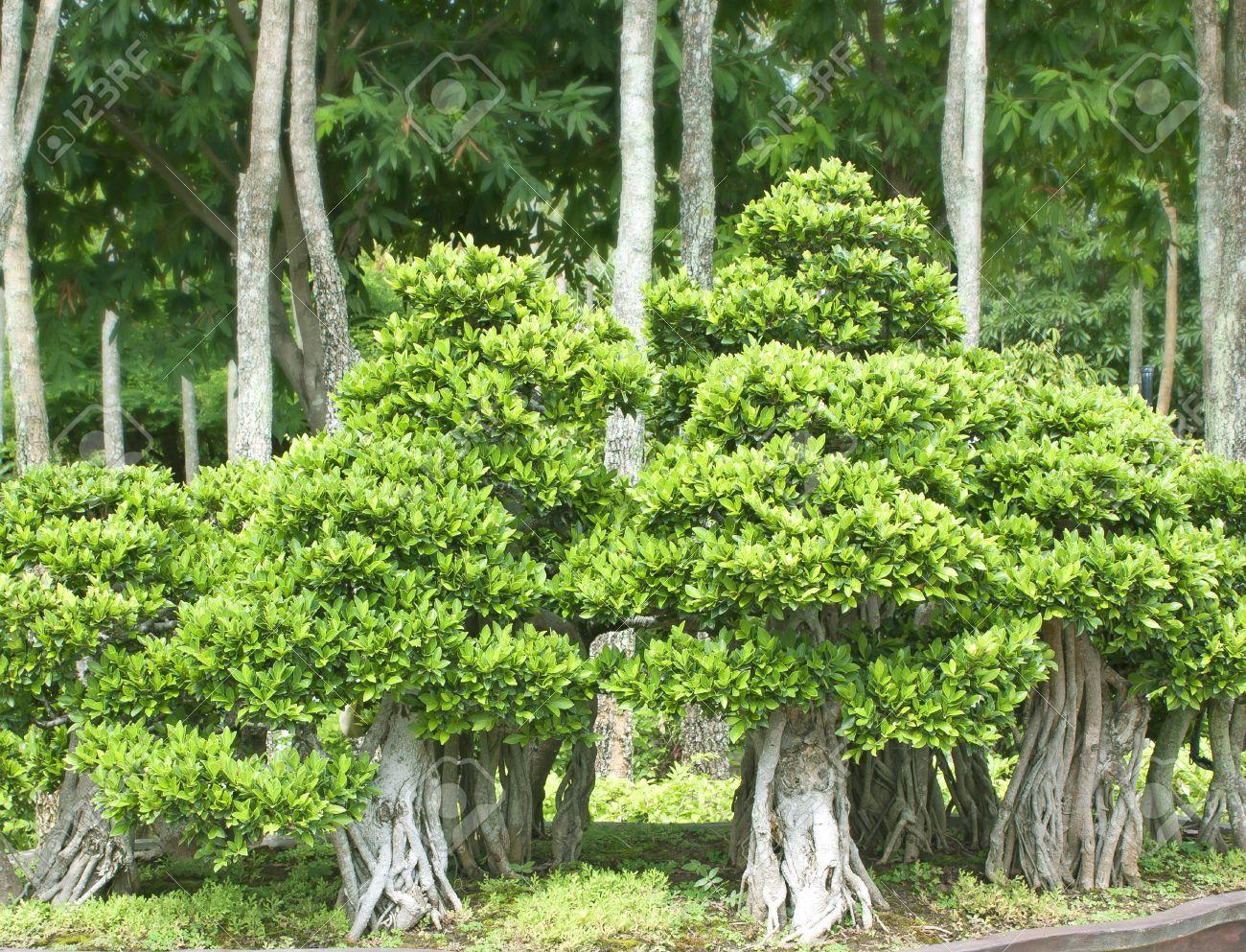 Bonsai Arboles Pequenos Arbustos Vegetacion En Macetas Fotos - Arboles-pequeos