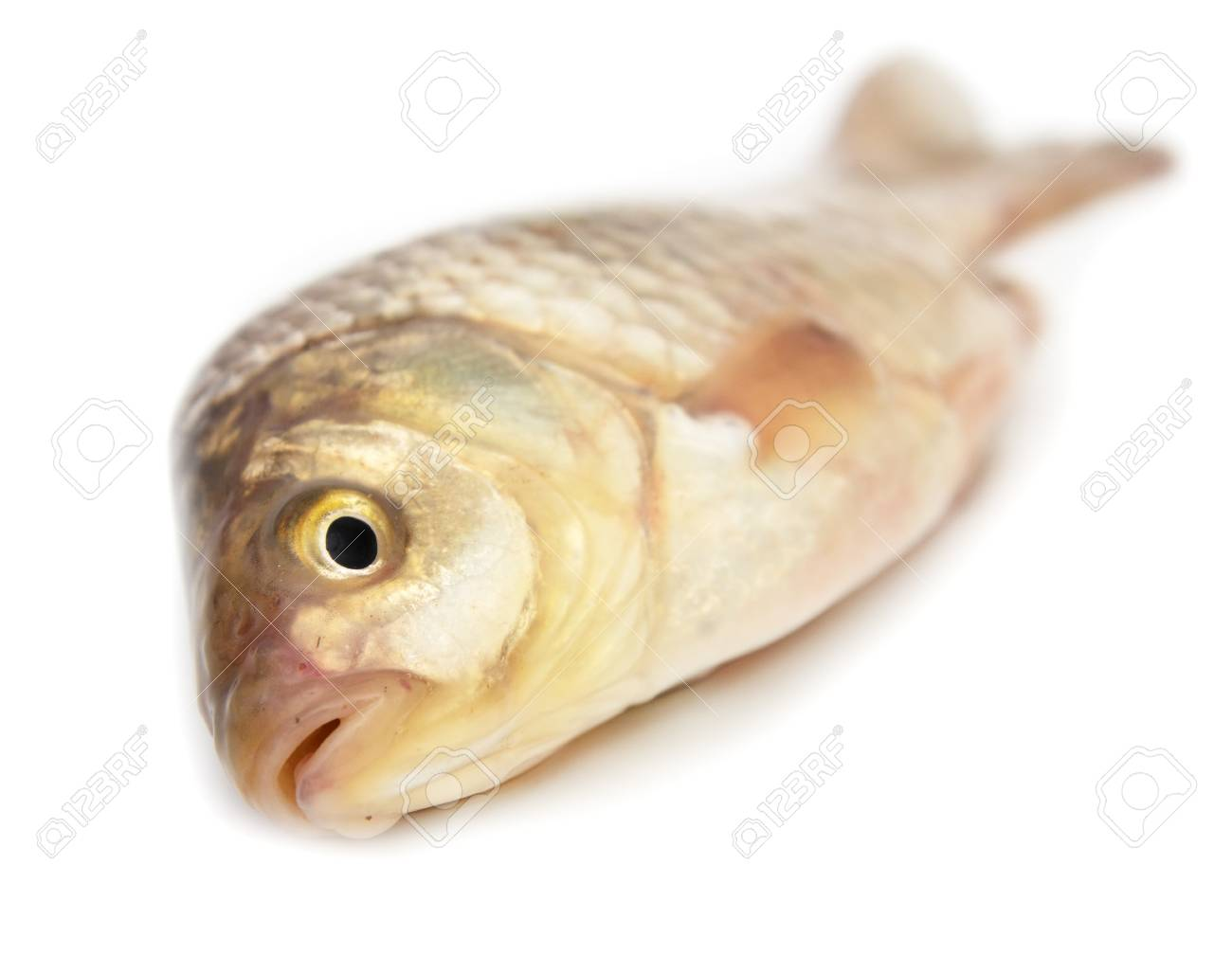 carp on a white background Stock Photo - 14060617