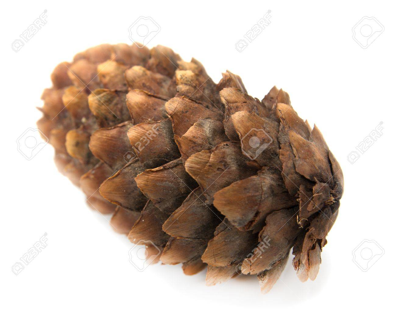 spruce pine cone on white background Stock Photo - 14061952