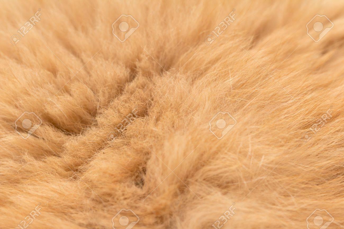 Animal fur texture background Stock Photo - 17637714