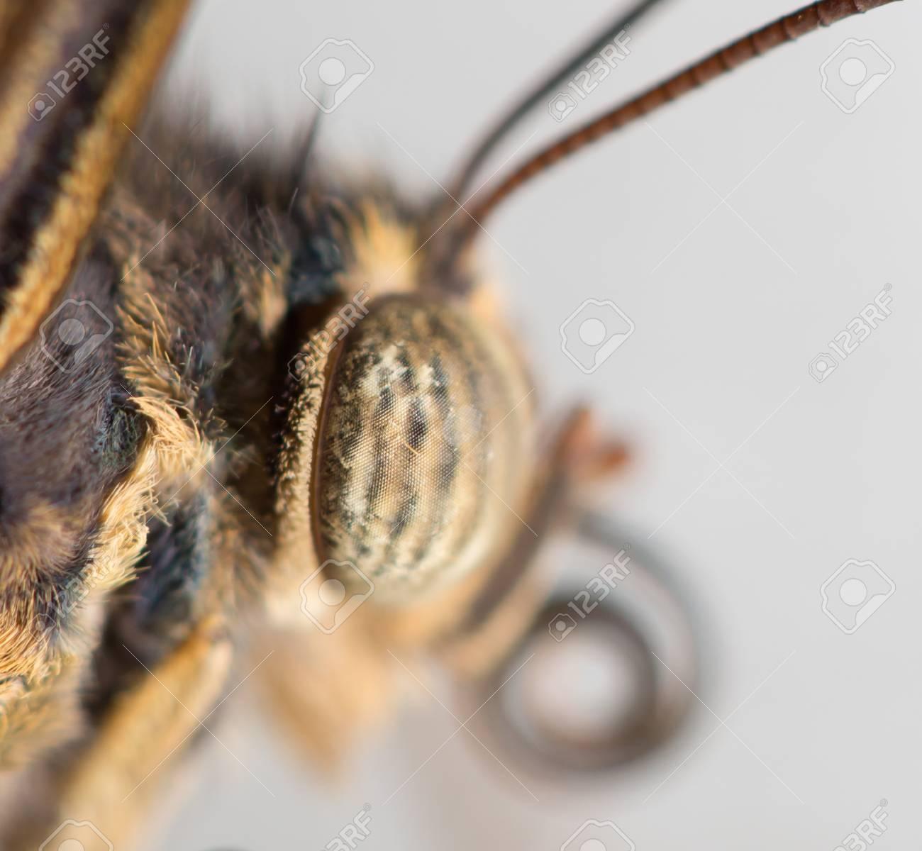 Portrait of a butterfly, macro Stock Photo - 18240613
