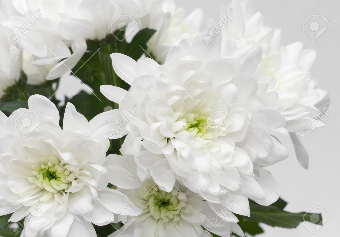 Gros Plan De Fleurs Blanches Aster Avec Des Petales Blancs Et Coeur